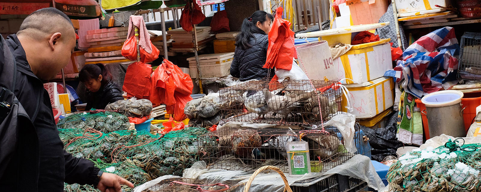 Live birds and eggs for sale at a market in Xiamen (Amoy), China