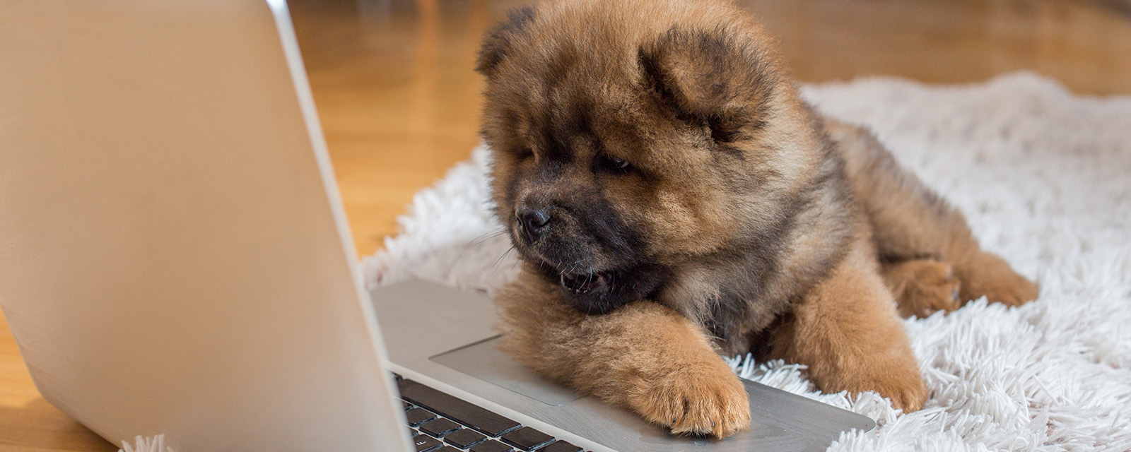 puppy sitting in front of a laptop