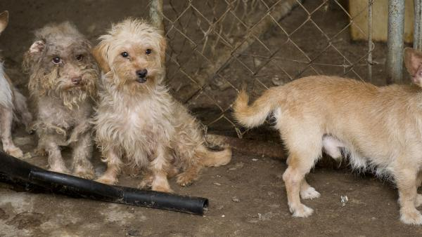 a group of dogs at a puppy mill