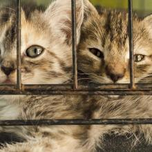 Two sad kittens in a cage