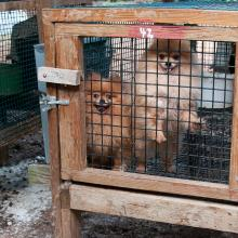 dogs in cages at a puppy mill